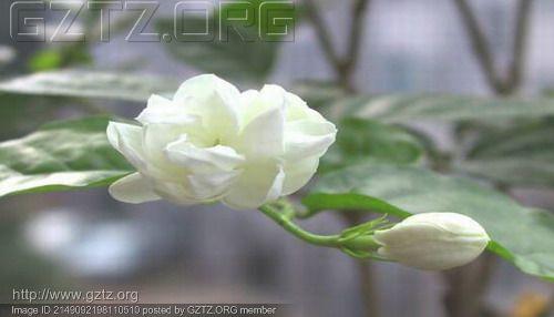 附件:!cid_zhizi.jpg