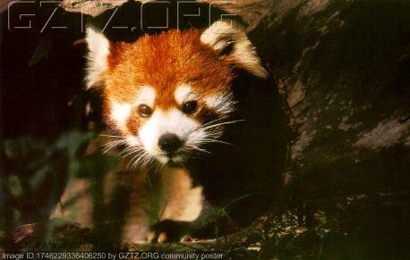 中国珍稀动物大全